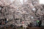 20140401nikaryo_syukugawara04