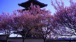 20140405korinji_kohigan02
