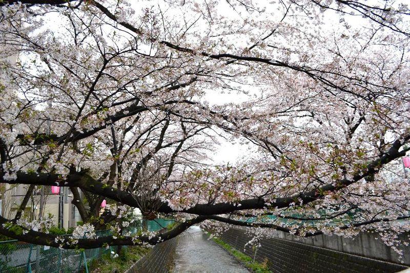 20140406asao_asaonigoubashi03
