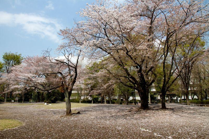 140409nishigawara  03