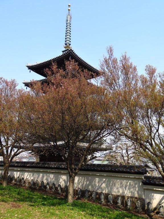 20140410korinji_kohigan02