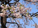 20140410korinji_hondoumae02
