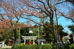 20140410hakusanjinjya03