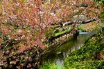 20140413nikaryoyosui_hashimotobashi03