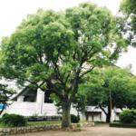 140801nakahara01