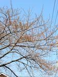 20140328sugaodaiyonkouen03