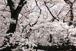 20140401nikaryo_syukugawara03