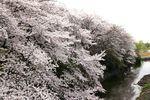 20140402nikaryo_syusuiguchi02