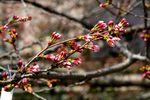20140328nikaryo_hashimotobashi02