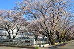 20140407asaogawa_yamaguchibashi01