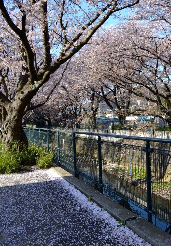 20140407asaogawa_yamaguchibashi03