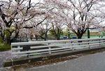 20140406asaogawa_yamaguchibashi04