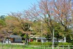 20140415hakusanjinjya03