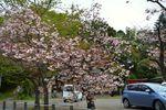 20140420hakusanjinjya_yaeshiro04