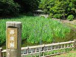 20140529ikutaryokuchi_syobu01