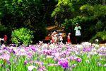 20140609ikutaryokuchi_syobu02