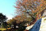20141103nikaryo_hashimoto-daiwabashi03