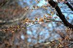 150325asaogawa_yamaguchibashi04