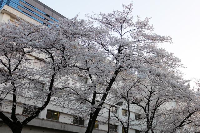 DSCF1564_医大病院