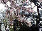 150402komae_nakaizumi02