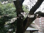 160403観察枝㈪