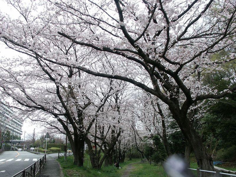 160403観察樹