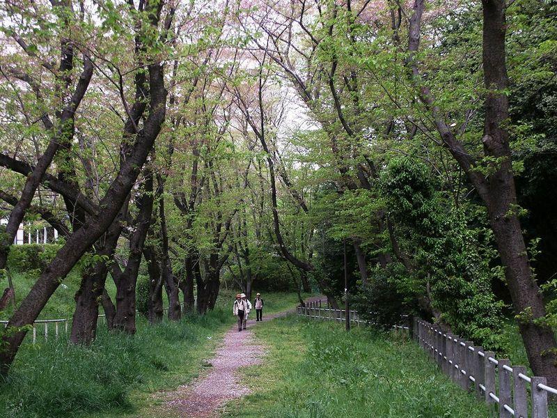 160416桜トンネル