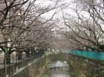 IMG_1328麻生川橋付近_1