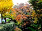 20141128nikaryo_nahanoshima-konyabashi05