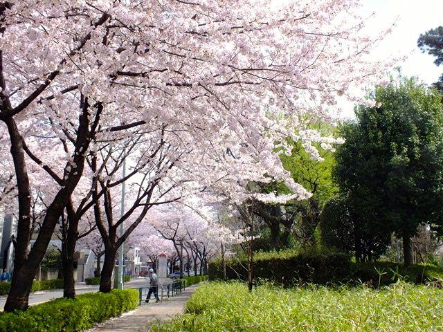 150402komae_nakaizumi01