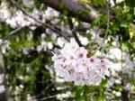 150402komae_motoizumi03