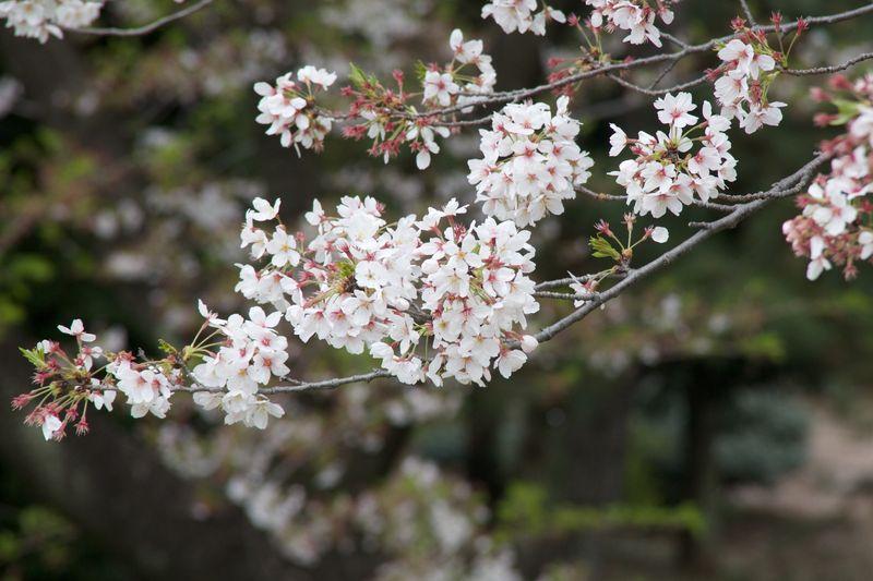150410nishigawara 03