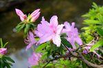 150412nikaryou_hashimotobashi_tutuji04