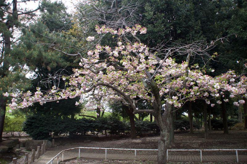 150412nishigawara 01