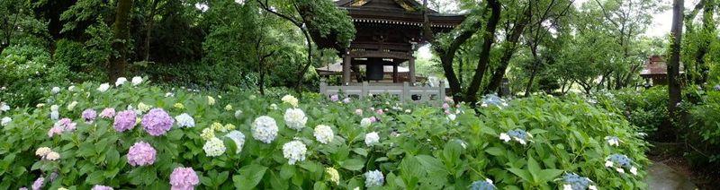 20150612myorakuji_ajisai05