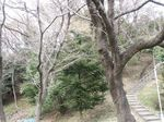 160325観察樹