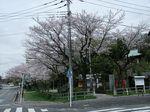 160408白山神社