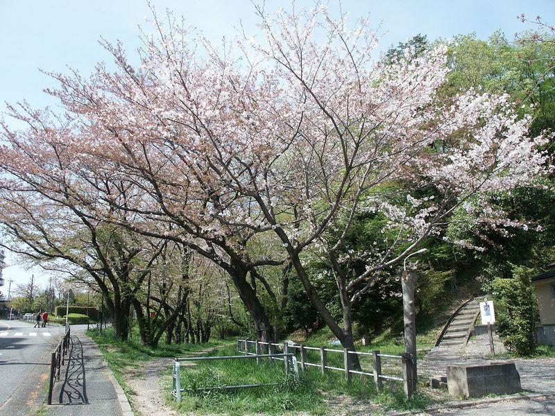 160411観察樹