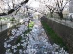 IMG_0578山口橋