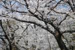DSC_0166.jpg白山神社2