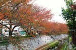 20141103nikaryo_hashimoto-daiwabashi02