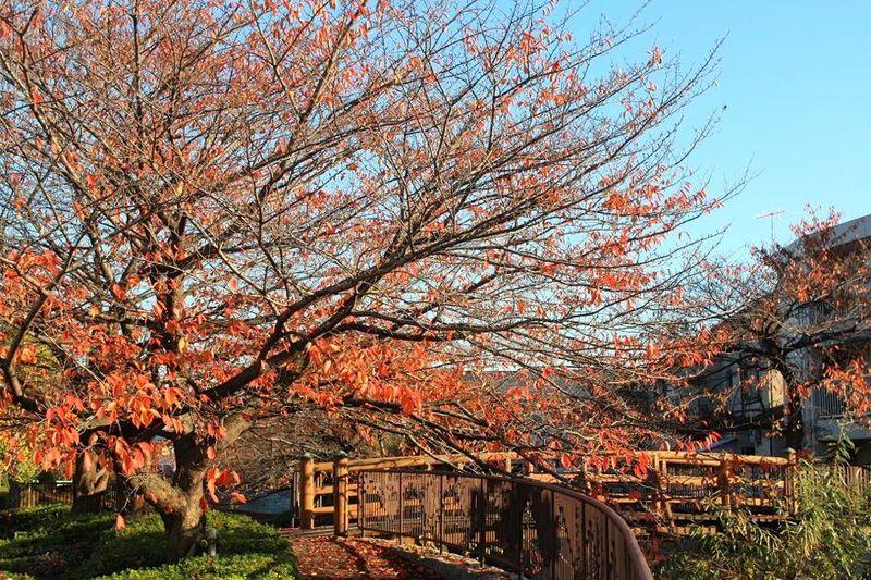 20141128nikaryo_nahanoshima-konyabashi02