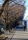 150325asaogawa_yamaguchibashi07
