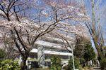 150327nishigawara 13