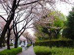 150405komae_nakaizumi04