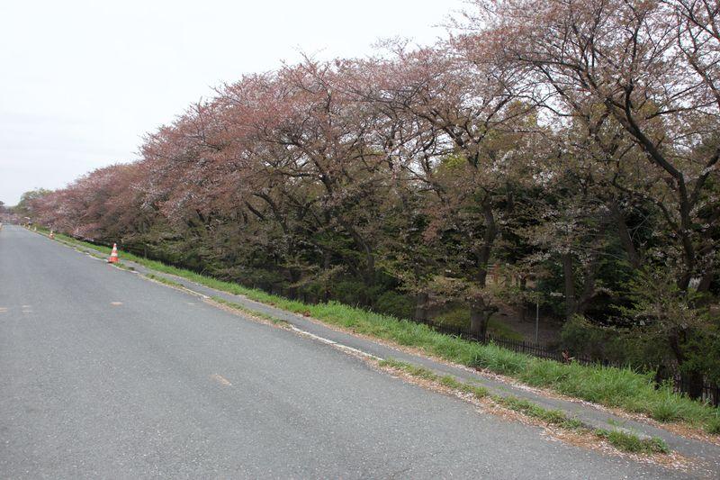 150410nishigawara 04