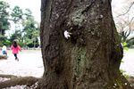 150410nishigawara 11