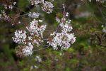 150412nishigawara 06