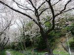 160408観察樹