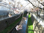 IMG_0581山口橋